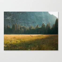 Meadow Sunset in Yosemite Canvas Print