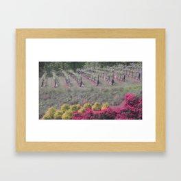 Georgia Vineyards Framed Art Print