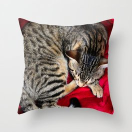 Cute Tabby Cat napping Throw Pillow