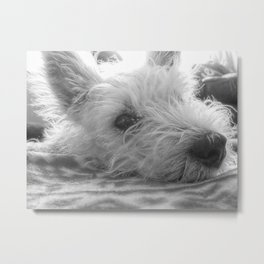 Westie puppy Metal Print