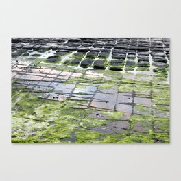 The Tesselated Pavement Canvas Print