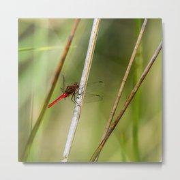 Dragon Fly Resting Metal Print