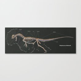 Dilophosaurus Wetherilli Skeleton Study Canvas Print