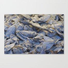 Dried Fish Canvas Print