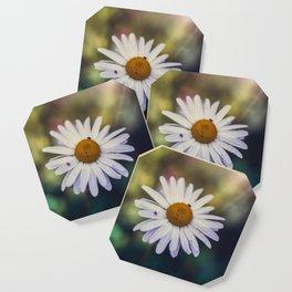 Daisy III Coaster