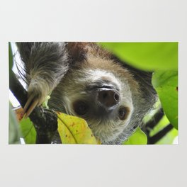 Sloth_20171105_by_JAMFoto Rug