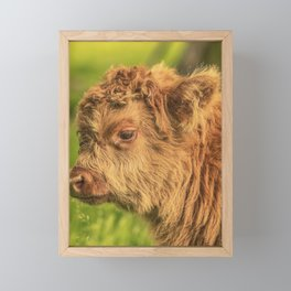 Highland Baby Framed Mini Art Print