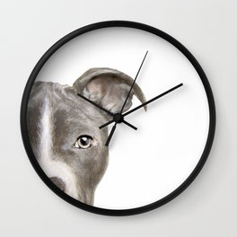 Pit bull with white background Wall Clock