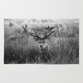 Velvet Antlers Rug