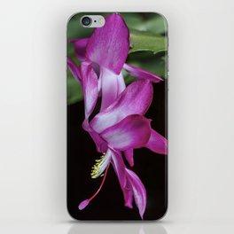 Christmas Cactus flower iPhone Skin