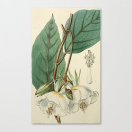 Edwards' Botanical Register Canvas Print