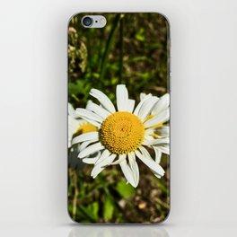 Daisy, Daisy iPhone Skin