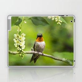 Hummingbird XVI Laptop & iPad Skin