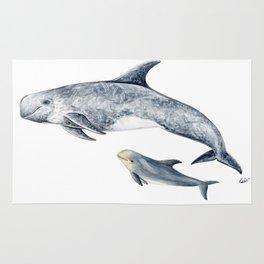 Risso´s Dolphin Rug