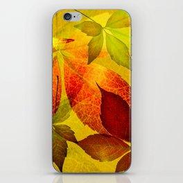 Virginia Creeper autumn colors iPhone Skin