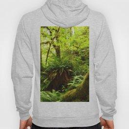 Rainforest Ferns Hoody