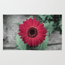 A Full Frontal Closeup of a Red Daisy Rug