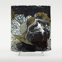 seashell Shower Curtains featuring seashell by MehrFarbeimLeben