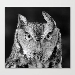 Screech Owl Stare Black and White Canvas Print