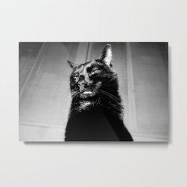 Anatole the crazy cat Metal Print