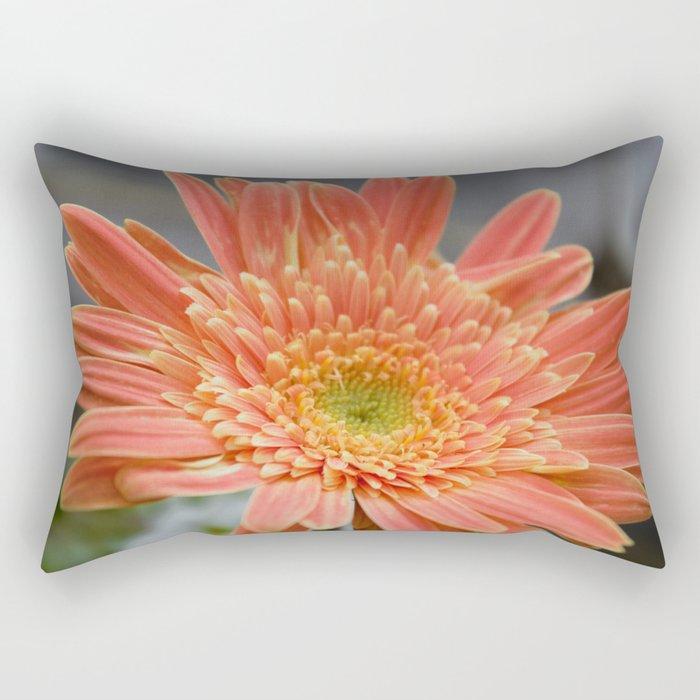 Barbeton Apricot-Melon Daisy Rectangular Pillow