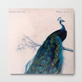 Vintage peacock bird print colorful feathers 1800s antique art nouveau deco nature book plate Metal Print