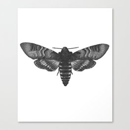 Dotwork Moth drawing Canvas Print