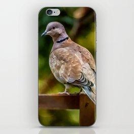 Collared Dove iPhone Skin