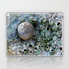 Nacre rock with sea snail Laptop & iPad Skin
