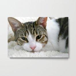 Kloeh the rescued cat Metal Print