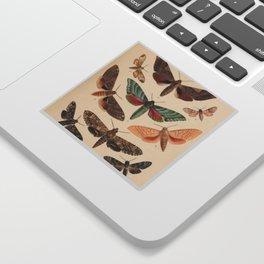Vintage Natural History Moths Sticker