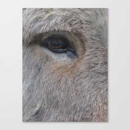 Donk-eye (I am so sorry for that) Canvas Print