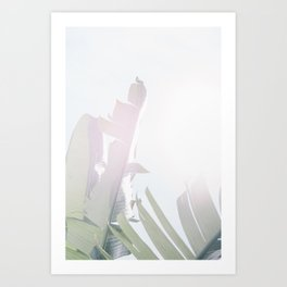 Palm on a sunny morning Art Print