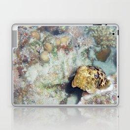 Baby Cuttlefish and Hard Coral Laptop & iPad Skin