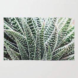 Haworthia succulent Rug