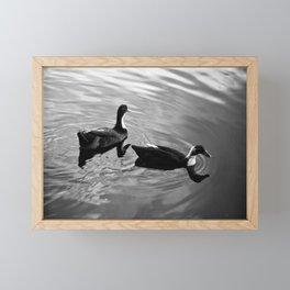 Ducks in the Lake Framed Mini Art Print