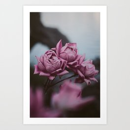 Wilted Art Print