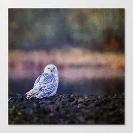 Snowy Owl squared Canvas Print
