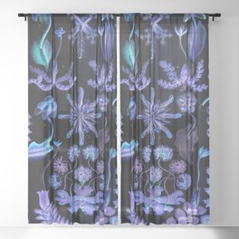 Haeckel's Sea of Darkness Sheer Curtain