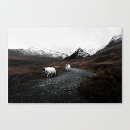Sheep in the highlands #adventure Canvas Print