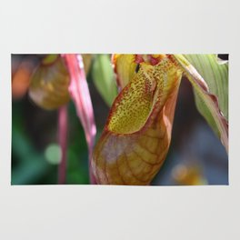 Lady Slipper Orchid II Rug