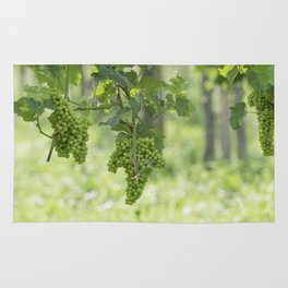 Bunch of grapes on vineyard Rug