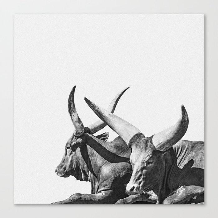 Animal Photography | Ankole-Watusi | Cattle | Bull | Steer | Black and White Canvas Print