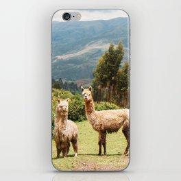 Llama Party iPhone Skin