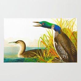 Great Northern Diver or Loon Rug