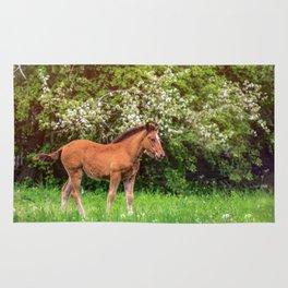 Nice little foal Rug