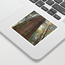 Redwood Trees Sticker