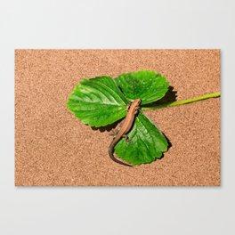 I am busy, I am tanning Canvas Print