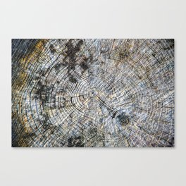 Old Tree Rings Canvas Print