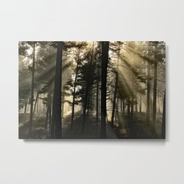 Woodland Sunrise Metal Print